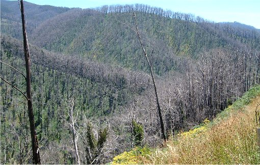Burnt Hillside