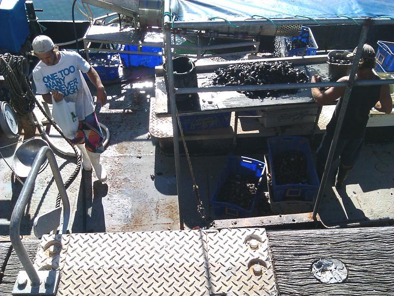 Fresh mussels from the boat at Eden