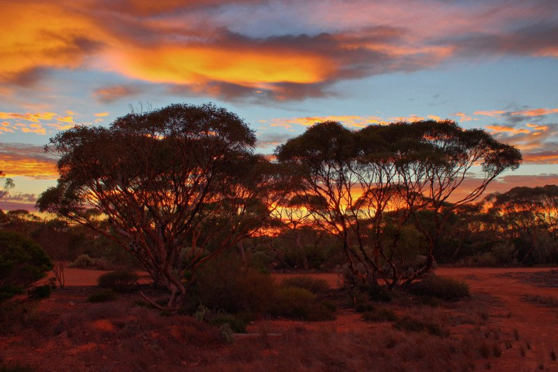 Nullarbor sunrise