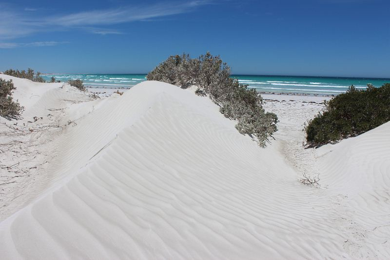 Shelly Beach dunes